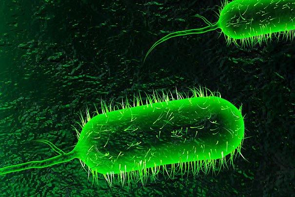 Cholera strain